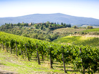 Tuscan Vineyards (Four)